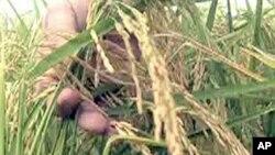 世界粮食计划署日益担心食品安全