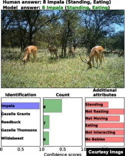 Deep learning can successfully identify, count, and describe animals in camera-trap images. (PNAS.org)