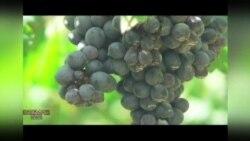 ღვინის არომატები