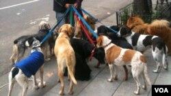 Según el hospital veterinario, South Paws, el 90% de perros que sufren de hipertermia mueren en los meses del verano.