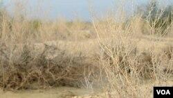 بلوچستان میں بارشوں کی کمی سے فصلوں کو نقصان پہنچ رہا ہے