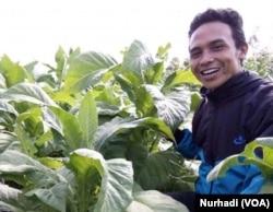 Eko Wahyu Susilo, petani tembakau di Selopampang, Temanggung. (Foto: VOA/Nurhadi)