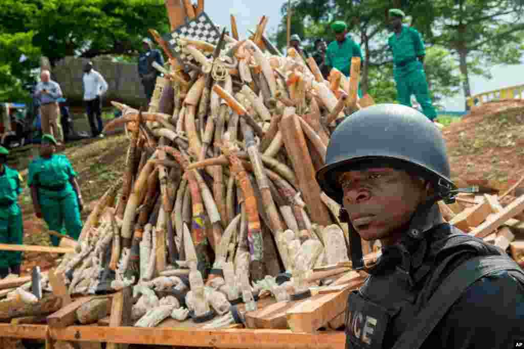 Des forces militaires montent la garde près du stock d'ivoire, Palais des Congrès, Yaoundé, 19 avril 2016.