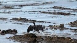 Derrames de petroleo no Soyo levam a investigação a companhia de conhecidas figuras - 3:35
