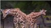 멸종위기 동물들이 뛰노는 샌안토니오 동물 농장...장애인 재활을 돕는 미술 프로그램