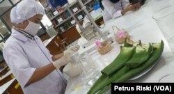 Seorang mahasiswa Fakultas Farmsi Ubaya sedang mengolah tanaman Lidah Buaya sebagai salah satu bahan pembuat hand sanitier (Foto: VOA/ Petrus Riski).