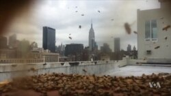 New York City Bees