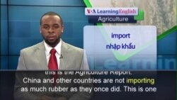 Anh ngữ đặc biệt: Low Prices Hurt Asian Rubber Farmers (VOA)