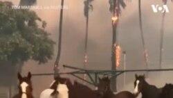 ԱՌԱՆՑ ՄԵԿՆԱԲԱՆՈՒԹՅԱՆ. Կամավորները ազատ են արձակել Կալիֆոռնիայի ձիարշավարանի ձիերին՝ նրանց փրկելով հրդեհից