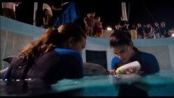 Cine: Winter el delfín 2