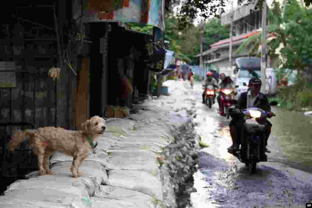 Dog on floodwall watches people pass in Sai Mai District, North Bangkok, October 19, 2011.