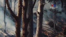 ԲԱՐԻ ԼՈՒՅՍ. Ստելլա Գրիգորյանը Բնապահպանական ֆիլմերի կինոփառատոնի մասին