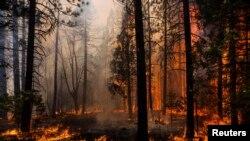 آگ کیلی فورنیا کے مشہور 'یوسمائیٹ نیشنل پارک' تک پہنچ گئی ہے
