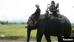 A tourist sits on the back of an elephant in Jul village, central highland province of Dak Lak, Vietnam, Sept. 6, 2009.
