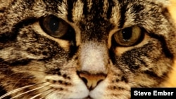 A female tabby cat shows alertness in her eyes.
