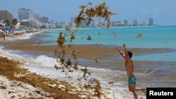 A tourist tosses sargassum into the air at Marlin Beach in Cancun, Mexico May 30, 2021. (REUTERS/Paola Chiomante)