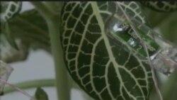 Преку сензор, растенијата ви кажуваат колку вода им е потребна