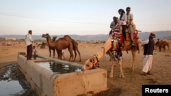 Tourists sit on a camel as it takes a drink of water at Pushkar Fair in the desert Indian state of Rajasthan November 23, 2012.