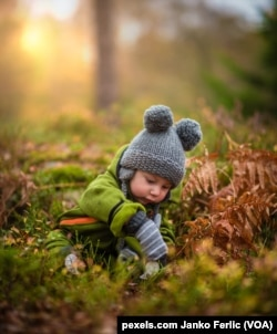 A baby plays in the autumn leaves.