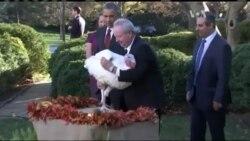 Ось чому Обама пов'язав біженців із Сирії з історією Дня Подяки. Відео