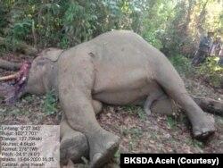 Tim dokter BKSDA Aceh saat melakukan bedah bangkai gajah Sumatera di Aceh Timur, Jumat (17/4). (Foto: Courtesy/BKSDA Aceh)