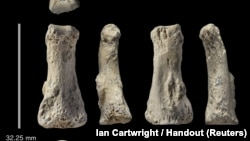 The single fossil finger bone of Homo sapiens - pictured from various angles - from the Al Wusta site, Saudi Arabia is pictured in this undated handout composite April 9, 2018. (Ian Cartwright/Handout via REUTERS)