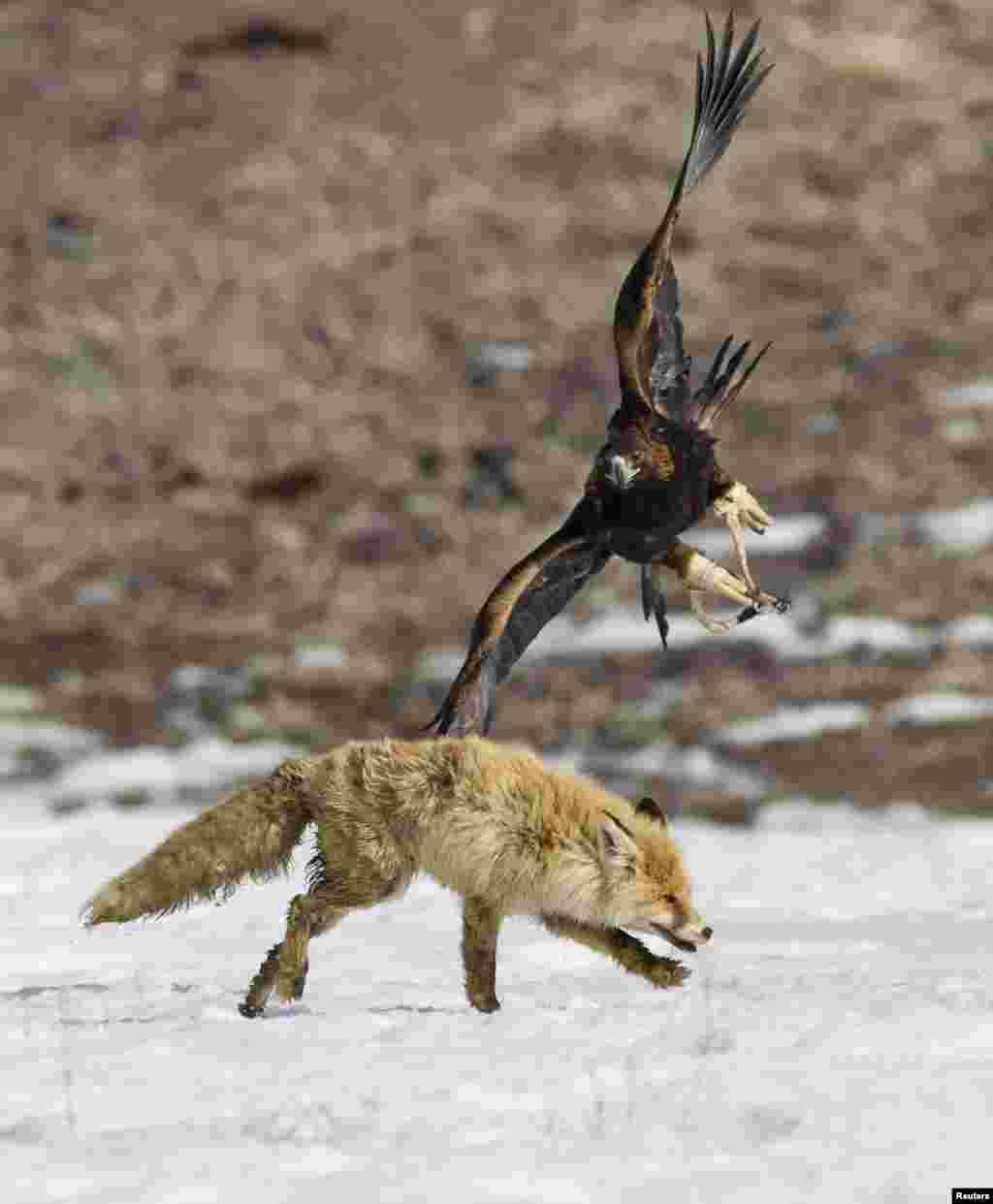 شکار کا ایک منفرد مقابلہ