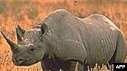 Nạn săn trộm tê giác tại Châu Phi, Châu Á gia tăng