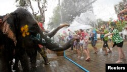 Gajah menyemprot air pada turis dalam perayaan festival air Songkran di provinsi Ayuthaya, Thailand. (Foto: Dok)