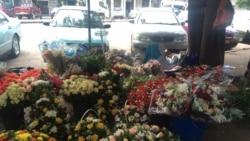 Udaba lwelanga leValentine's Day silethulelwa nguAnnahstacia Ndlovu