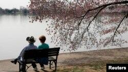 미국 워싱턴의 타이들 베이슨 벚꽃 나무 아래에서 커플이 휴식을 취하고 있다.