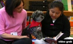 "Public School 57 third-grader Aelane Vasquez reads to Izzy, a Havanese therapy dog. ""I love reading to Izzy because he listens to me, and he doesn't make fun of me when I make a mistake,"" she says."