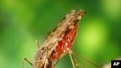 Protecção Contra a Malária
