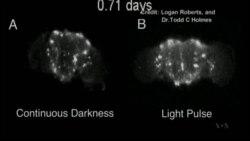 Video of Fruit fly brain in jet lag