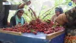 Tarımda Hem Üretici Sayısı Azalıyor Hem Üretim Alanı
