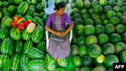 watermelon and melon fair