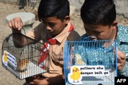 Dua murid sedang melihat peliharaan ayam yang diberikan sebagai bagian program mengurangi ketergantungan gawai pada anak di Bandung, Jawa Barat, 21 November 2019. (Foto: AFP)