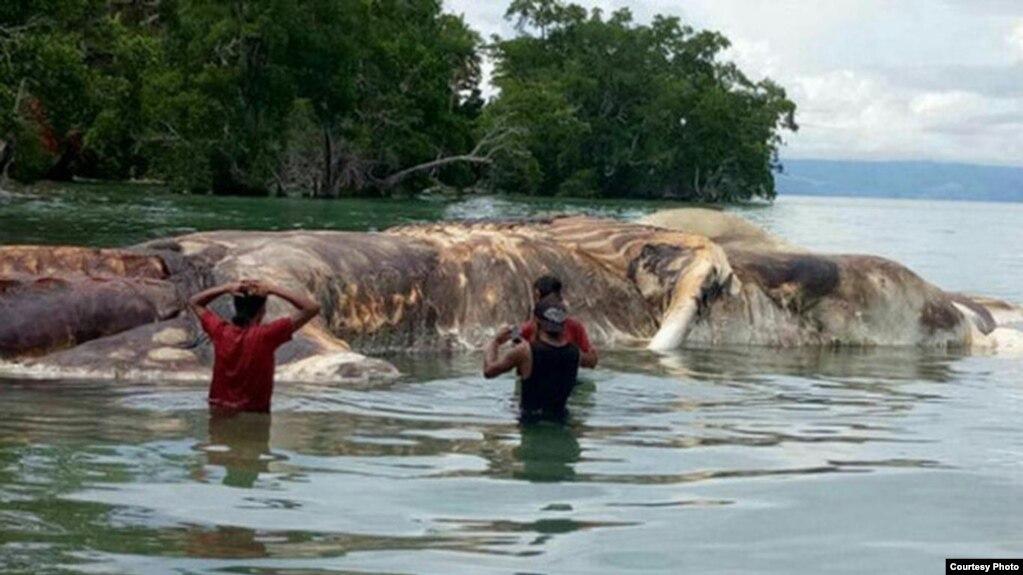 sea monster carcass identified
