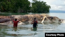 A mysterious sea creature that washed up on an Indonesian beach has been identified. (Pattimura Military Command)