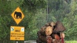 Công nghệ quân sự bảo vệ đàn voi tại Malaysia