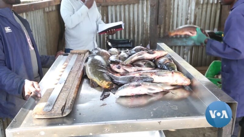 Pandemic's Economic Impact in Kenya Has Driven Some to Illegal Fishing