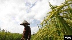 Vietnam dipuji atas keberhasilannya mengatasi kelaparan dan menaikkan ekspor berasnya menjadi nomor dua terbesar di dunia setelah Thailand.