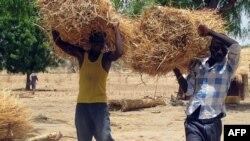 Nigerians of Cameroonian origin carry straw bales to build houses in a village of Tallamallabrahim, northern Cameroon, May 27, 2013, where they settled after fleeing Nigeria to escape massacres by the Islamic group Boko Haram.