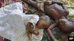 ต้นสมุนไพรในแอฟริกาที่อยู่ในการวิจัยเพื่อพัฒนาเป็นยารักษามาลาเรียชนิดใหม่อยู่ในภาวะเสี่ยงสูญพันธุ์