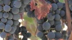 Kalifornijska vina i tehnologija 21. stoljeća