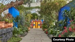 The Haupt Conservatory comes alive with the colors of Kahlo's Mexico, greeting visitors with an evocation of the artist's garden at the Casa Azul (Blue House), her lifelong home. Passing through blue courtyard walls, visitors stroll along paths lined with flowers, showcasing a variety of important garden plants from Mexico. (Photo: New York Botanical Garden)