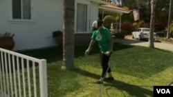 Untuk menghemat air, bukannya menyiram air ke rumput, banyak pemilik rumah di California mengecat rumputnya.