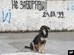 "FILE - A dog sits on a street in Podgorica, Montenegro, by graffiti that reads: ""Don't forget! March 24, 1999"" — the day when NATO began airstrikes, attacking Serbia and Montenegro."