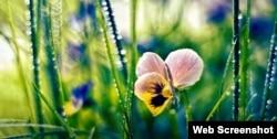 صبح کی خنکی میں پھولوں اور پودوں پر عموماً شبنم کے قطرے چمکتے نظر آتے ہیں