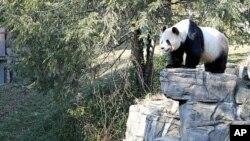 美香1月20日在华盛顿动物园